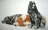 39 Cockers au repos - Three Cocker Spaniels resting