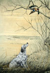 56 Setter et Canard branche - English Setter and Duck in a tree