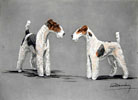 79 Deux Fox-Terriers - Two Fox-Terriers