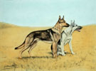 91 Bergers en plaine - Two Alsatian Shepherd-dog in field